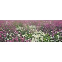Фотообои Твоя планета Премиум Поляна цветов 136х388 см