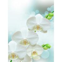 Фотообои Barton Wallpapers Цветы F17002 200х270 см